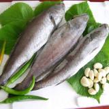 나로도 민어 3마리 (1미당 30cm내외)