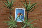 Achim vol.2 (아침 2호)