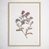 [파블로랩] 북유럽 식물 인테리어 그림 액자 Ononis