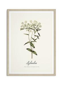 """[파블로랩] 북유럽 식물 인테리어 포스터 액자 Botanical Flower """"Lychnidea"""""""