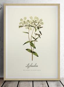 """유럽산 우드프레임 포스터 원목액자 - Botanical Flower """"Lychnidea"""""""