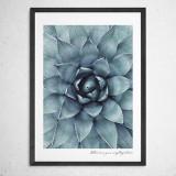[파블로랩] 북유럽 식물 인테리어 포스터 액자 Succulent no.01