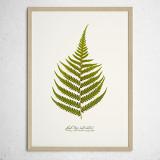 [파블로랩] 북유럽 식물 인테리어 포스터 액자 Fern Leaf no.02
