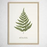 [파블로랩] 북유럽 식물 인테리어 포스터 액자 Fern Leaf no.03