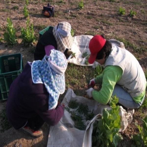 [한빛농장] 보리새싹가루 100g 유기농보리새싹가루 : 유기농사과한빛농장