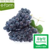 [이팜] 무농약 캠벨 포도(특)1kg