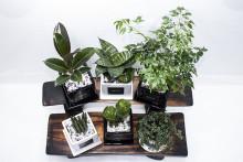 [오픈이벤트] GRATO 스투키 등 공기정화식물 / 미니화분 6종