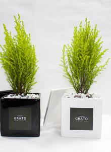 GRATO 모던 율마 미니화분 / 공기정화식물