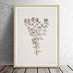 유럽산 우드프레임 포스터 원목액자 - Spartium 01