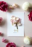 미니장미 드라이플라워 카드 엽서 캘리그라피 주문제작 여자친구 부모님 기념일 선물 카드제작
