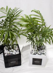 GRATO 모던 테이블 야자 / 공기정화식물