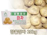 [예약주문]감물농원 감물감자 20kg