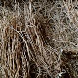 지리산 야생 산청 우슬뿌리 자연산