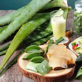 유기농 생 알로에 사포나리아/베라 3kg