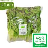 [이팜] 무농약 포기상추(1kg)
