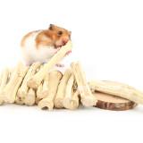 사탕수수 자일리톨 이갈이 덴탈스틱 5P (토끼/기니피그/친칠라/햄스터등 설치류 이갈이)