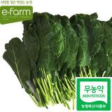 [이팜] 무농약 케일(쌈용) 1kg