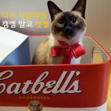 골골캔하우스 캣벨 고양이 스크래쳐 하우스