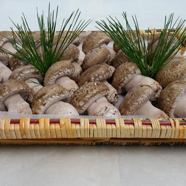 송화고버섯 선물용(특상품)