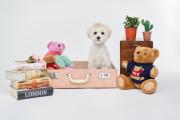 뉴욕펫 / 러기지하우스 핑크 / 강아지집 / 고양이집