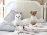 강아지옷/봉주르펫/ 강아지침낭/ 애견침낭 ARTISTIC SLEEPING BAG-grey,pink