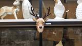 Bambi hunter small / 사슴 머리 장식