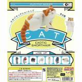 [키탄클럽] PUTITTO 이그조틱 숏헤어 캣 /이국적인 털이 짧은 컵위의 고양이/EXOTIC SHORTHAIR/(1BOX=12개입)랜덤 낱개 판매/고양이/냥이