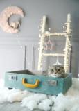 뉴욕펫 러기지하우스 블루 고양이 스크래쳐