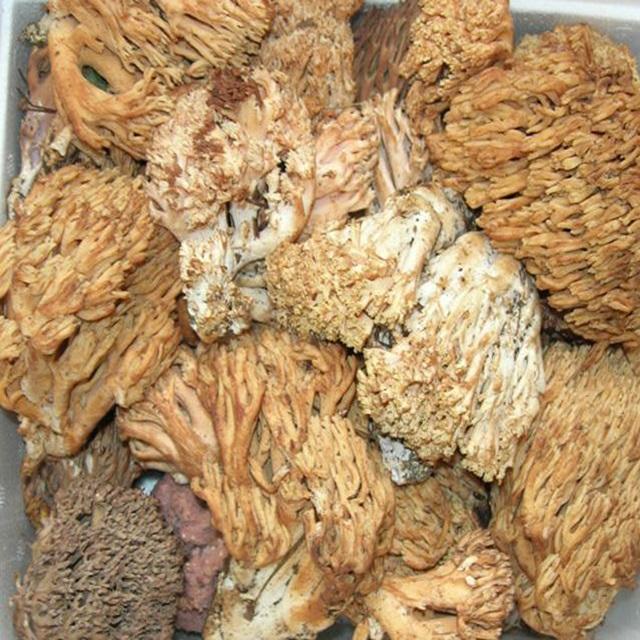 [냉동] 자연산 싸리버섯