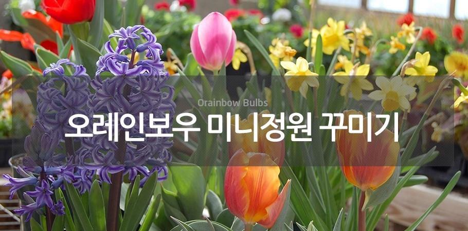 오레인보우미니정원꾸미기 가을구근 모음