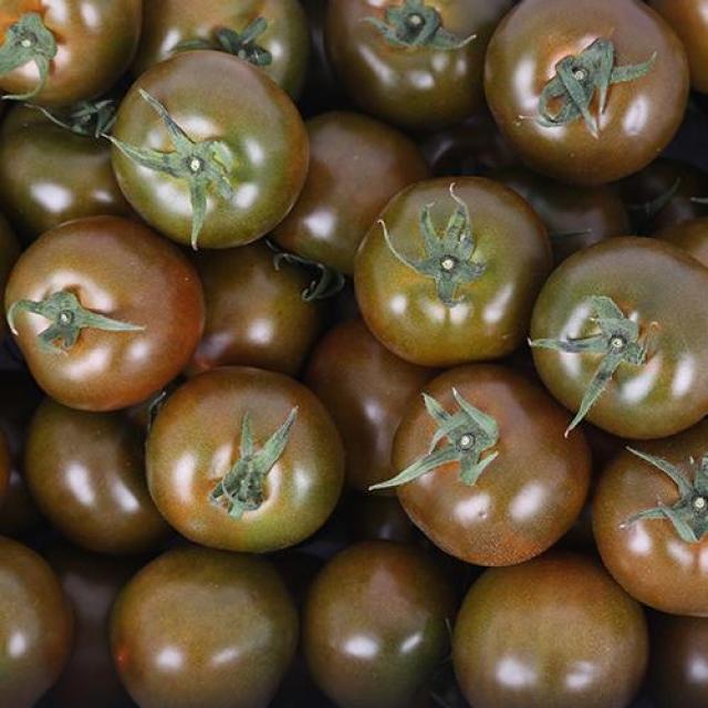 강원도 화천 고품질 흑토마토 [5kg]